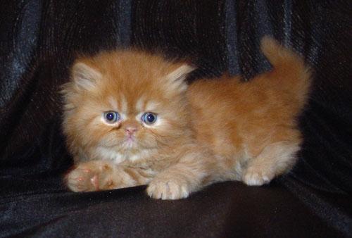посмотреть фото кошек разных пород
